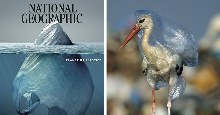 plastic crisis impact on wildlife national geographic june issue cover fb11 700 png