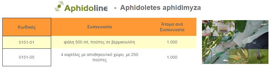 aphidoline aphidoletes
