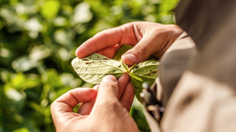 leaf damage 1540x866 1540x866