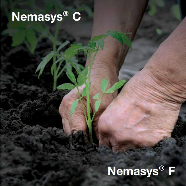 NEMASYS CF