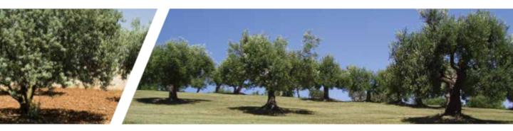ENTEC olive 2018 01