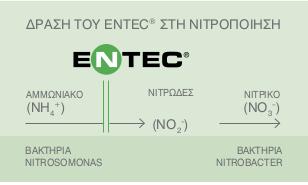 ENTEC olive 2018 02
