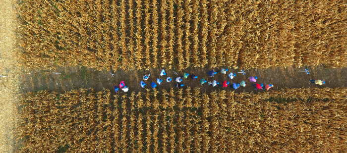 DEKALB ekdhlwsh2 crop