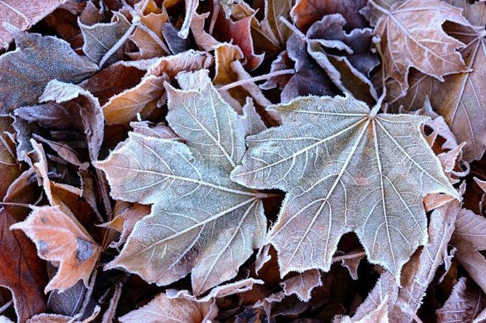 autumnfrost