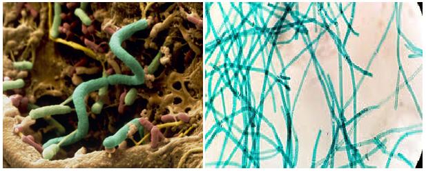 soilbacteria