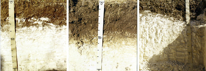 Fig 2 The soils composing the Calcic Kastanozems transect in the test area Transect