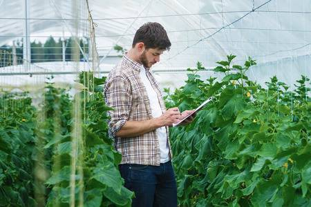 44191129 guy with the tablet slowly inspect plants young agronomists monitor the harvest young farmers are gr