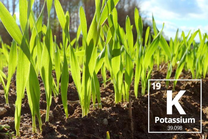 Taurus Inbound Blog Jan2018 AgriculturalNutrientProfile Potassium Part4 01b