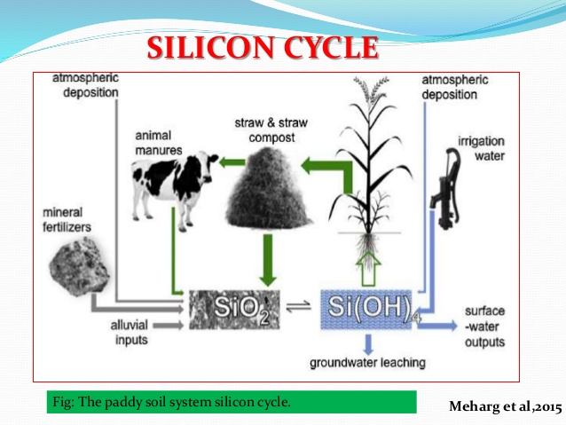 role of silicon in alleviating biotic and abiotic stresses in plants 7 638