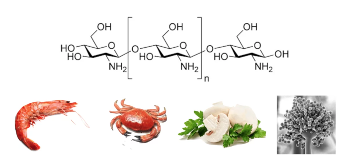 What is chitosan
