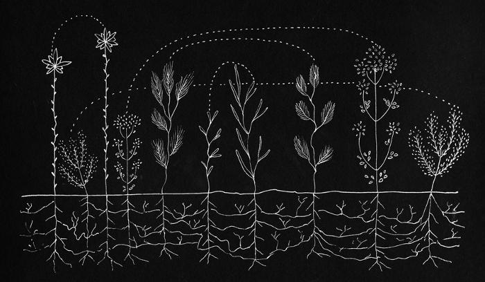 plantcommunication