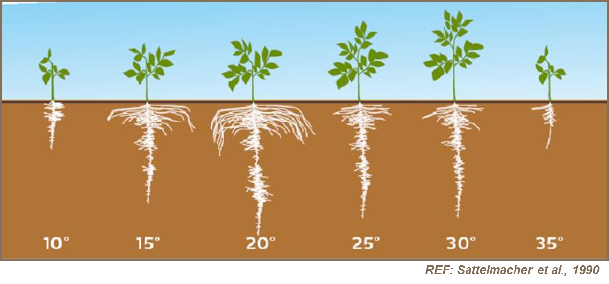 planttemperature1