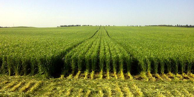 TRAFIC FARMING