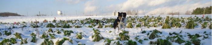 snowycrop 4