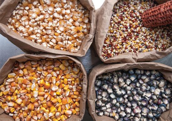 corn kernels jpg