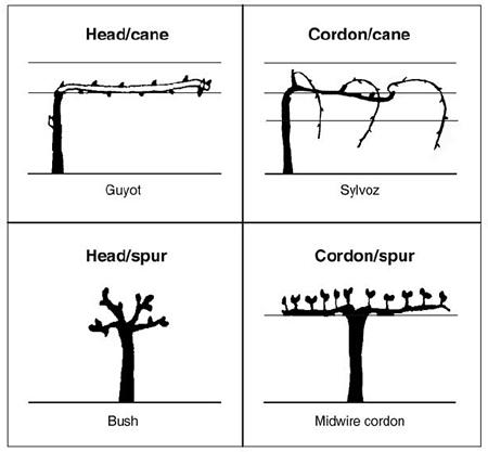commontrainingsystems