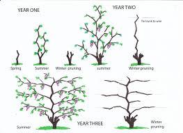 grape years