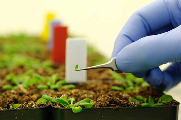nanotechnology in agriculture 0