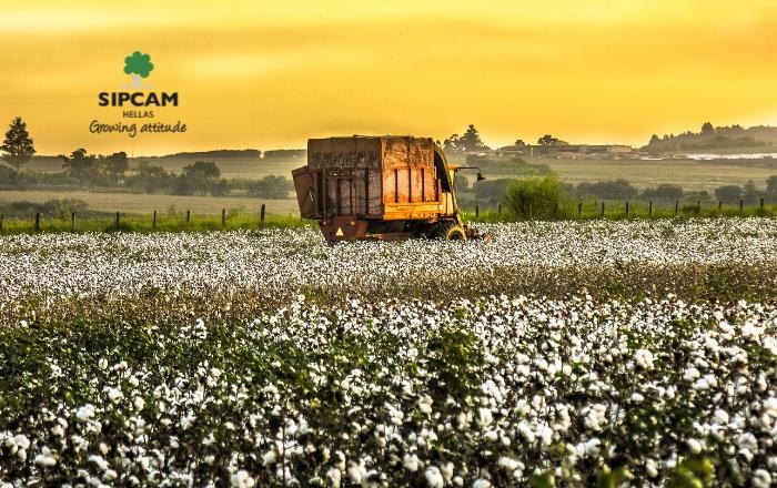 Επένδυση στην ειδική θρέψη για υψηλή παραγωγή & ποιότητα βαμβακιού