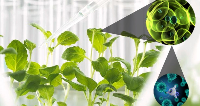 Νανοτεχνολογία: Τι είναι και ποιες οι προοπτικές για τη γεωργία;