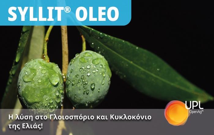 SYLLIT®OLEO -  H λύση στο Γλοιοσπόριο και στο Κυκλοκόνιο της Ελιάς