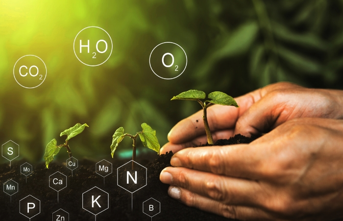 Τα 14 Απαραίτητα Θρεπτικά Στοιχεία για την Ανάπτυξη των Υγιών και Εύρωστων Φυτών