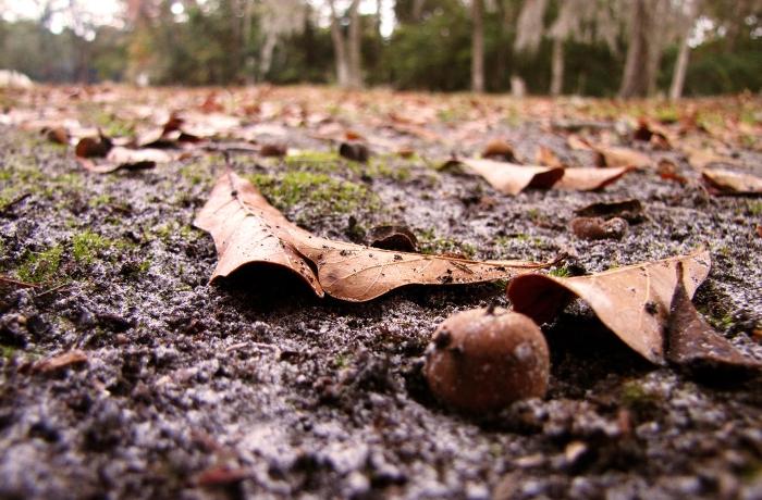 Οι ωφέλιμοι μύκητες και η κατεργασία του εδάφους, μάλλον δεν τα πάνε και πολύ καλά…