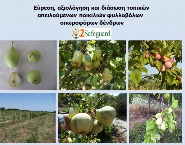 Δράσεις εύρεσης, αξιολόγησης και αξιοποίησης τοπικών ποικιλιών φυλλοβόλων οπωροφόρων δένδρων από τον ΤΦΟΔ Νάουσας