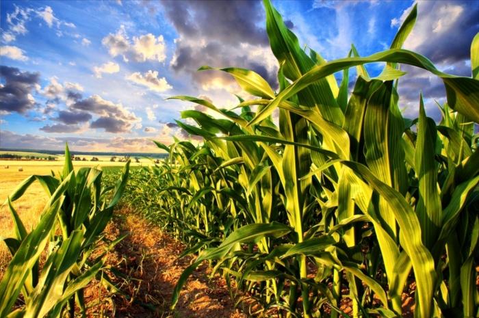 6 πρακτικές για μια καλή εκκίνηση για την καλλιέργεια του αραβόσιτου