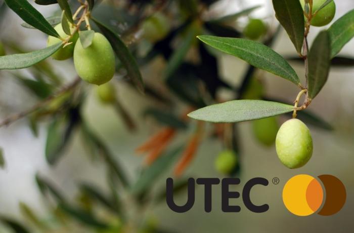 Πλεονεκτήματα στη λίπανση της καλλιέργειας της Ελιάς, με UTEC 46®
