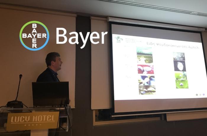 Η Bayer και το Μπενάκειο Φυτοπαθολογικό Ινστιτούτο (Μ.Φ.Ι.) ενημερώνουν για τον ψευδόκοκκο του αμπελιού
