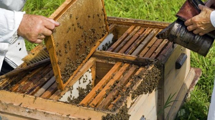 Δικαιολογητικά για τις Δράσεις: Αντικατάσταση κυψελών, Νομαδική μελισσοκομία, Κυψέλες Διαχείμασης