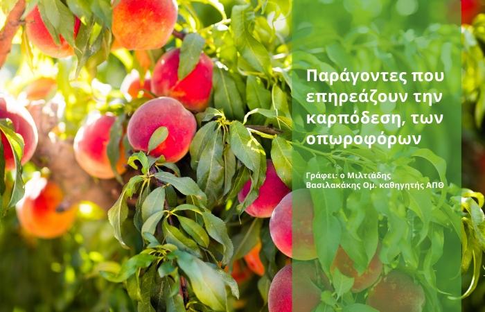 Παραγωγικότητα οπωροφόρων δένδρων