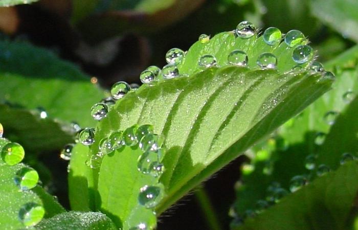 Διαπνοή: η κινητήριος δύναμη των φυτών - Farmacon - Blog - Η #1 online  αγροτική εφαρμογή