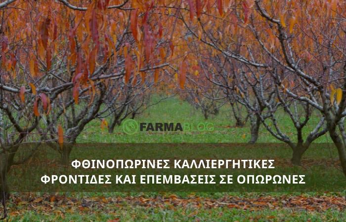 Καλλιεργητικές φροντίδες και φθινοπωρινές επεμβάσεις σε οπωρώνες