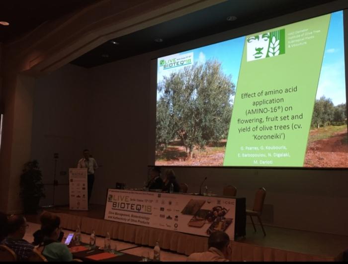 Εντυπωσιακά νέα για το Amino 16 και την ευεργετική του επίδραση στην καλλιέργεια της ελιάς με μια κορυφαία διεθνή διάκριση!