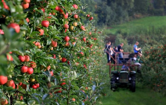 Καλλιεργητικά μέτρα για την αντιμετώπιση ασθενειών στα μηλοειδή