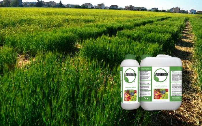Επίδραση εφαρμογής Amino16 στην απόδοση & την ποιότητα Χειμερινών σιτηρών και στη συγκέντρωση νιτρικού αζώτου στο έδαφος