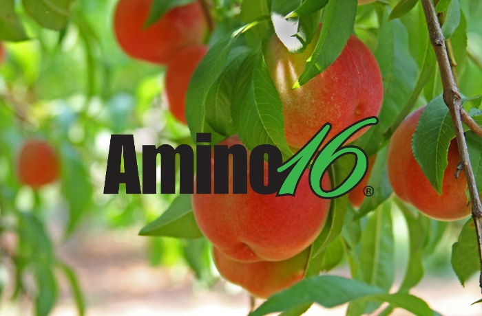 Μελέτη αξιολόγησης της επίδρασης του Amino16® στα ποιοτικά χαρακτηριστικά και στην απόδοση στη Ροδακινιά