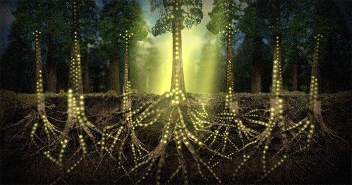 10 γεγονότα που αποδεικνύουν ότι τα φυτά είναι πιο έξυπνα απ'ότι νομίζουμε