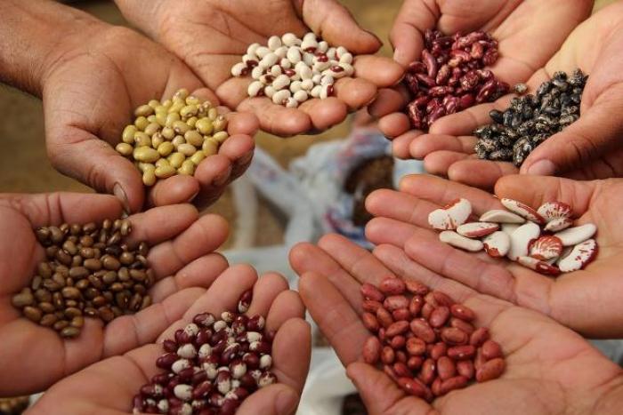 Παραδοσιακές ποικιλίες και γενετική μηχανική: Ποιος ο ρόλος τους στα μελλοντικά συστήματα τροφίμων;