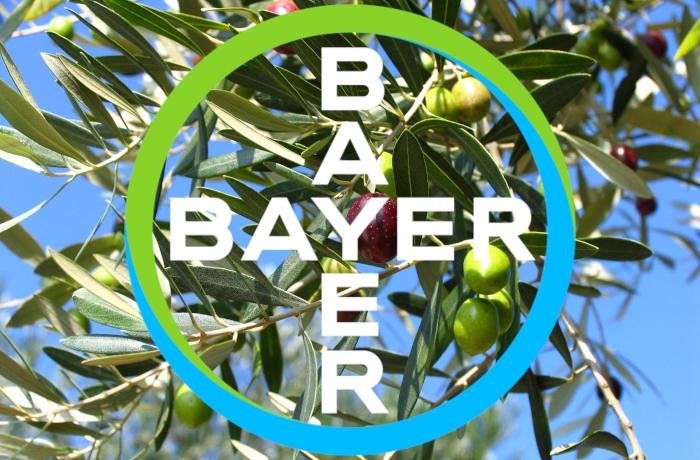 Η Bayer χορηγός σε Ημερίδα για την ελιά με θέμα: «Επίκαιρα προβλήματα και λύσεις στην ελαιοκαλλιέργεια»