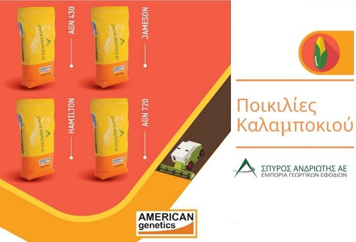 Οι ποικιλίες Καλαμποκιού από την Σπύρος Ανδριώτης ΑΕ, για υψηλής ποιότητας αποδόσεις!