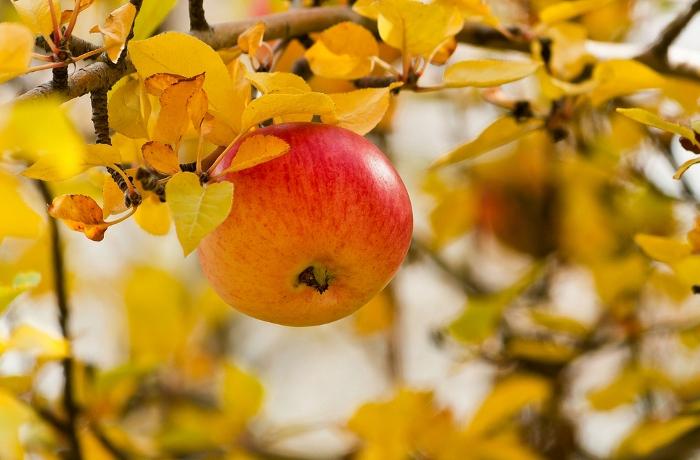 Απαραίτητοι ψεκασμοί Οπωρώνων & καλλιεργητικά μέτρα σε Μηλοειδή